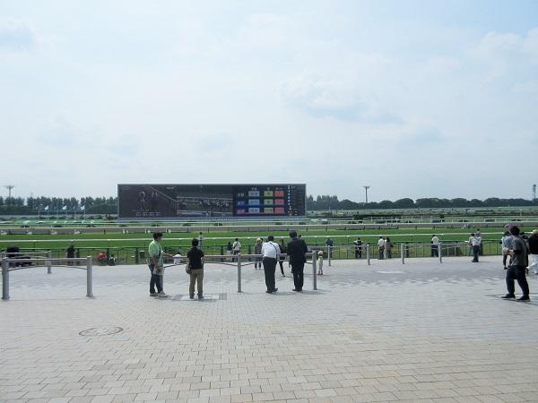 京都競馬場のコース
