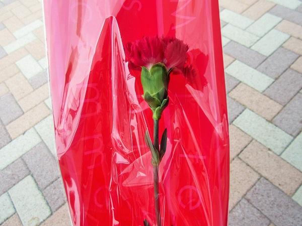 京都競馬場のカーネーションプレゼント