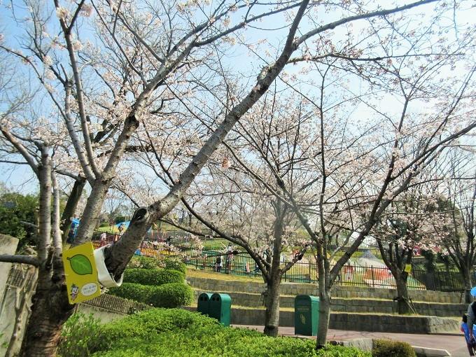 ひらパーの桜